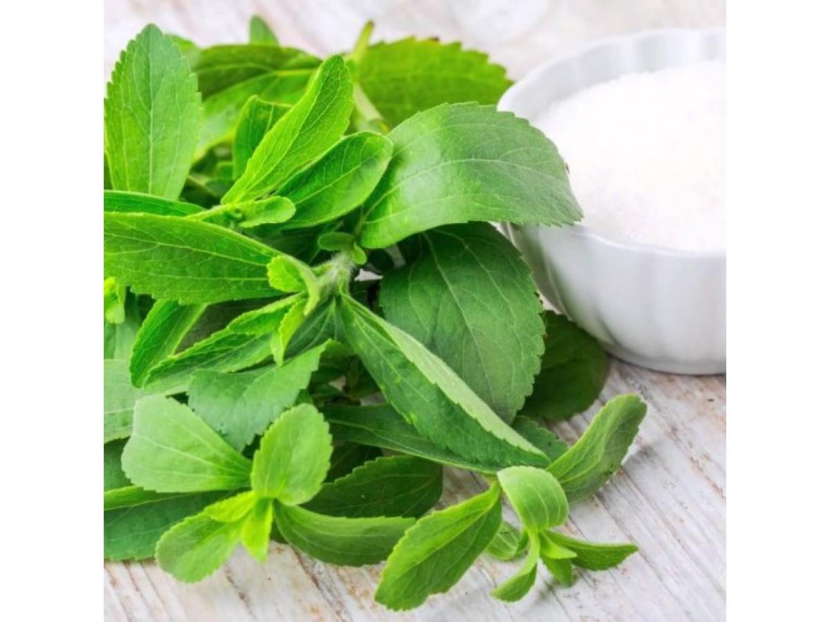 Лекарственные - лечебные травы и растения